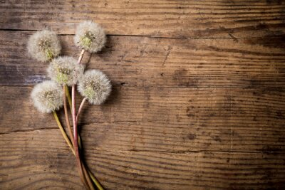 Adesivo Bouquet di denti di leone bianco sul tavolo in legno