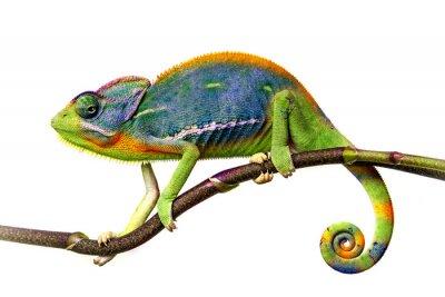Adesivo camaleonte