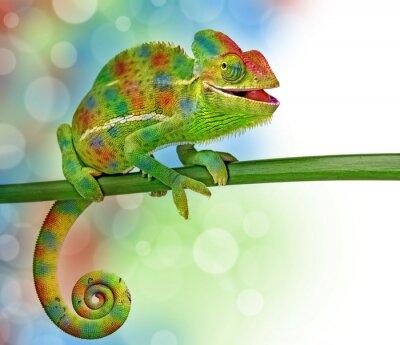 Adesivo camaleonte e colori