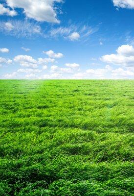 Adesivo campo di erba e cielo perfetto