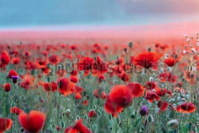 Adesivo Campo di papaveri rossi su un tramonto