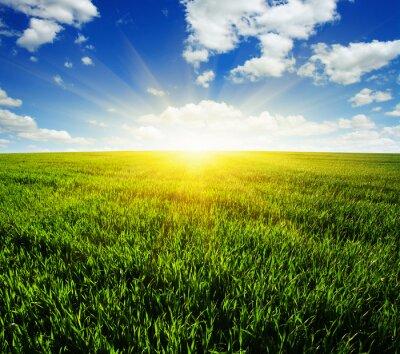 Adesivo campo e il sole