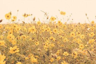 Adesivo campo fiore giallo prato annata retrò