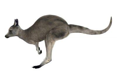 Adesivo Canguro grigio orientale
