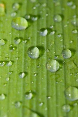 Adesivo Cascata rdrops su una foglia verde