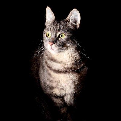 Adesivo Cat, sfondo nero