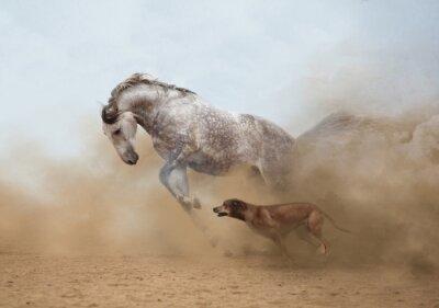 Adesivo Cavallo lusitano