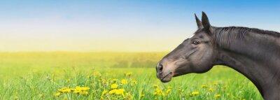 Adesivo Cavallo nero su sfondo estate con tarassaco, bandiera