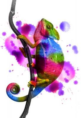 Adesivo Chameleon - colori