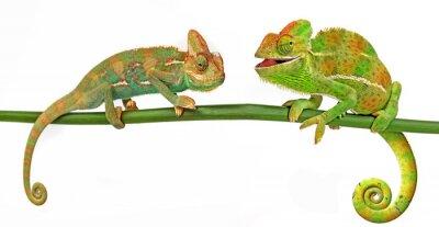Adesivo Chameleons