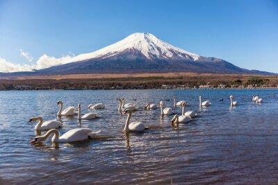 Adesivo cigno bianco swimimg nel lago Yamanaka, 5 Lago di fuji