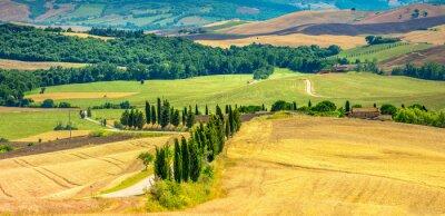 Adesivo Cipressi lungo la strada di campagna