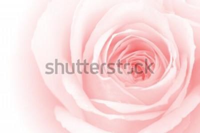 Adesivo closeup petali di rose colorate per lo sfondo