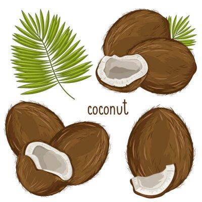 Adesivo Coconut isolato, vettore.