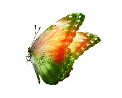 Adesivo Color butterfly , isolated on white background