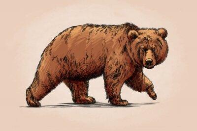 Adesivo colore incide isolato orso grizzly