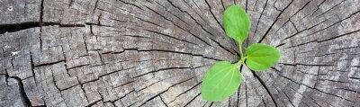 Adesivo Concetto di ecologia. Crescente pianta di germoglio del vecchio legno e simboleggia la lotta per una nuova vita, banner panoramico design di frontiera.
