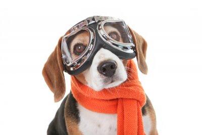 Adesivo concetto di pet festa, cane in bicchieri che volano