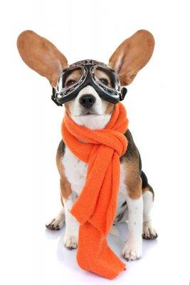 Adesivo concetto di viaggio o vacanza pet aviatore