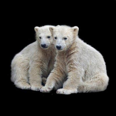 Adesivo Confraternita di cuccioli di orso polare