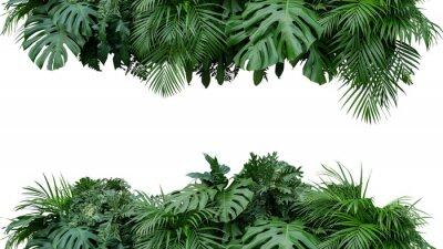 Adesivo Contesto tropicale della natura di disposizione floreale del cespuglio della pianta del fogliame delle foglie isolato su fondo bianco, percorso di ritaglio incluso.