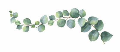 Adesivo Corona di vettore dell'acquerello con foglie e rami di eucalipto verde.
