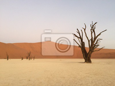 Adesivo Dead Vlei, Namibia