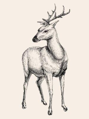 Adesivo Deer illustrazione vettoriale, disegnata a mano, schizzo