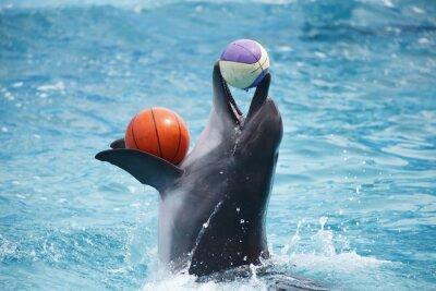 Adesivo delfini carino durante un discorso al delfinario