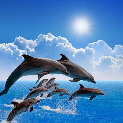 Adesivo Delfini che saltano