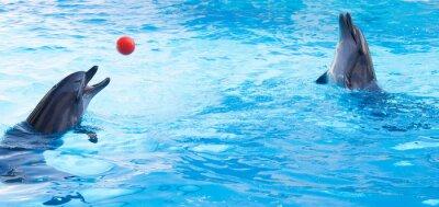 Adesivo Delfini giocare palle