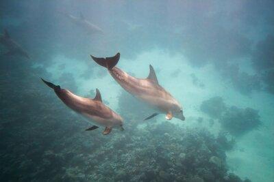 Adesivo Delfino sotto acqua