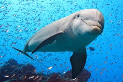 Adesivo delfino subacqueo su sfondo barriera
