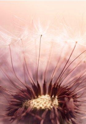 Adesivo di semi di dente di leone sul sole - Estratto