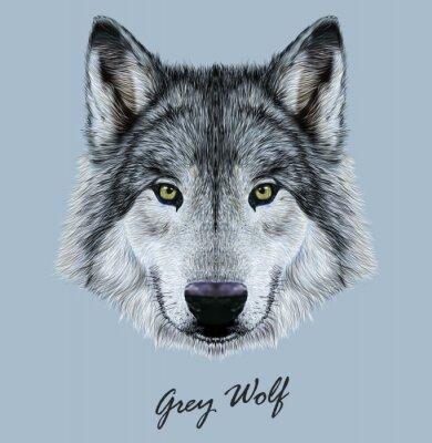 Adesivo Digital illustrazione vettoriale ritratto di un lupo.