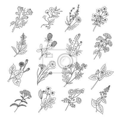 Disegni Fiori.Disegni Di Sketch Botanici Illustrazione Vettoriale Di Fiori
