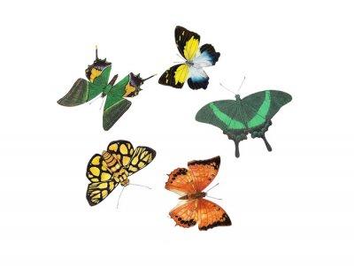 Adesivo disegno della farfalla