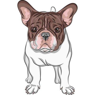 Adesivo disegno vettoriale cane domestico French Bulldog razza