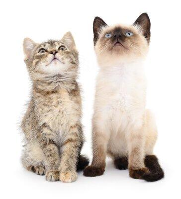 Adesivo Due piccoli gattini