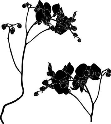Adesivo due rami di orchidee schizzi su bianco