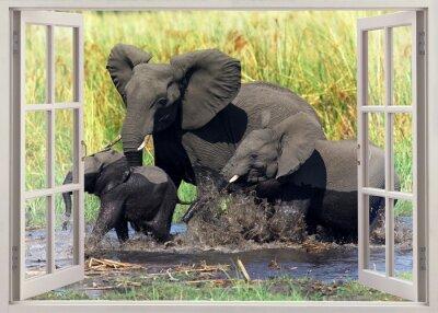 Adesivo Elefanti