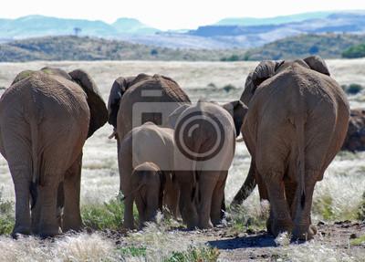 Adesivo elefanti africani a piedi attraverso Damaraland