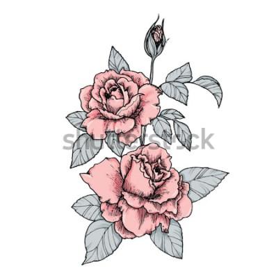 Adesivo Elegante vignetta con rose rosa. Disegnata a mano illustrazione vettoriale isolato in stile vintage