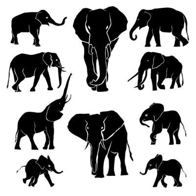 Adesivo Elephant Silhouette Confezione