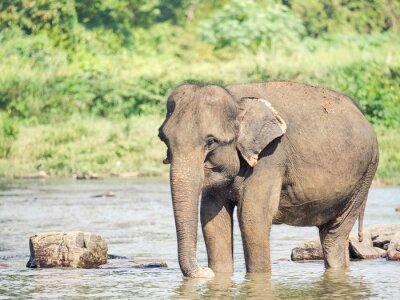 Adesivo Elephatnt