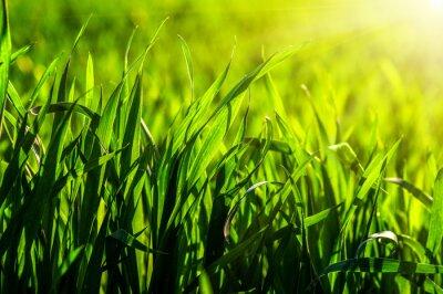 Adesivo erba e luce del sole
