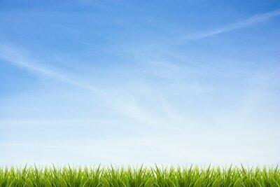 Adesivo Erba erba sotto il cielo blu e nuvole