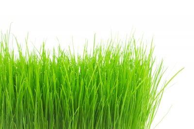 Adesivo Erba fresca verde
