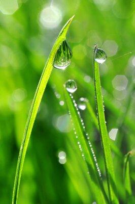 Adesivo Erba fresca verde con gocce di rugiada del primo piano. Nature Background