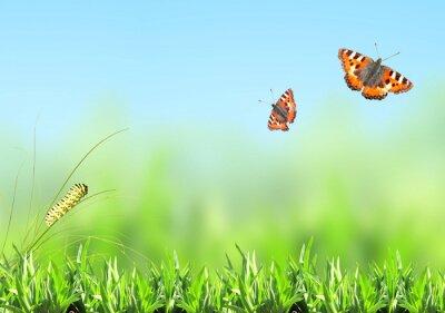 Adesivo Erba verde, bruco e la farfalla